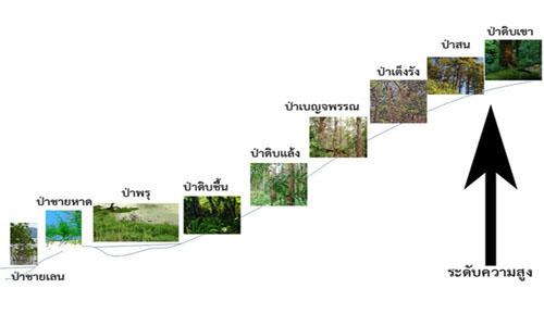 รู้จักประเภทของป่าไม้ในไทยหรือยัง